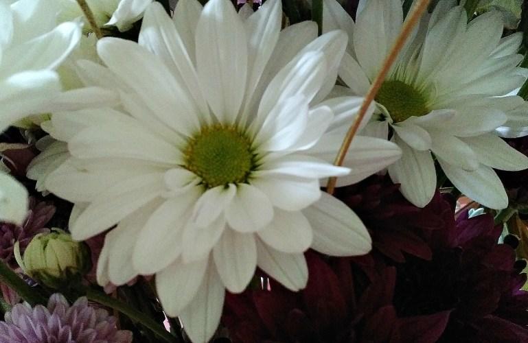 Friday Flowers – The Golden Wedding Anniversary