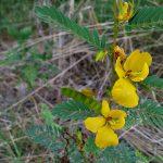 Friday Flowers – Yellow Wildflower
