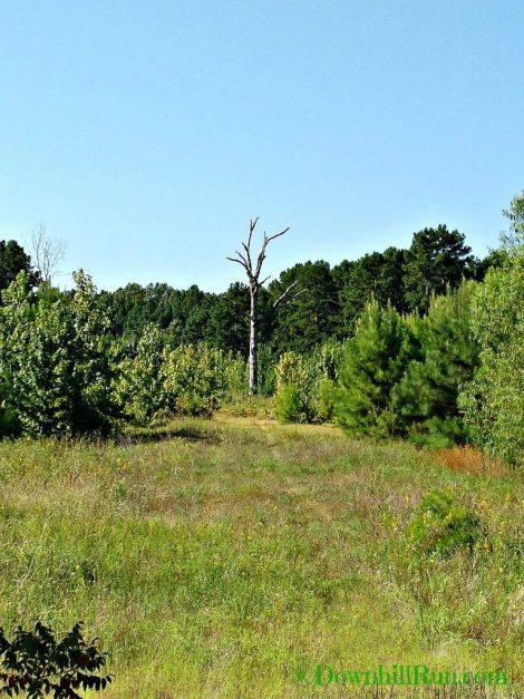 Nature Walk tree