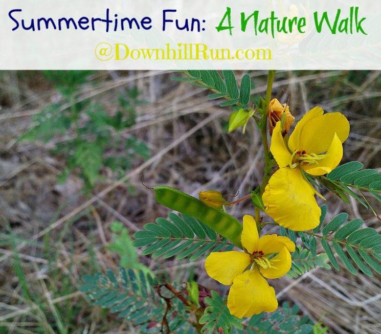 nature walk flowers