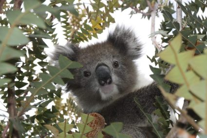 Fun things to do with kids over 10 in Australia. Traveling with kids in Australia.