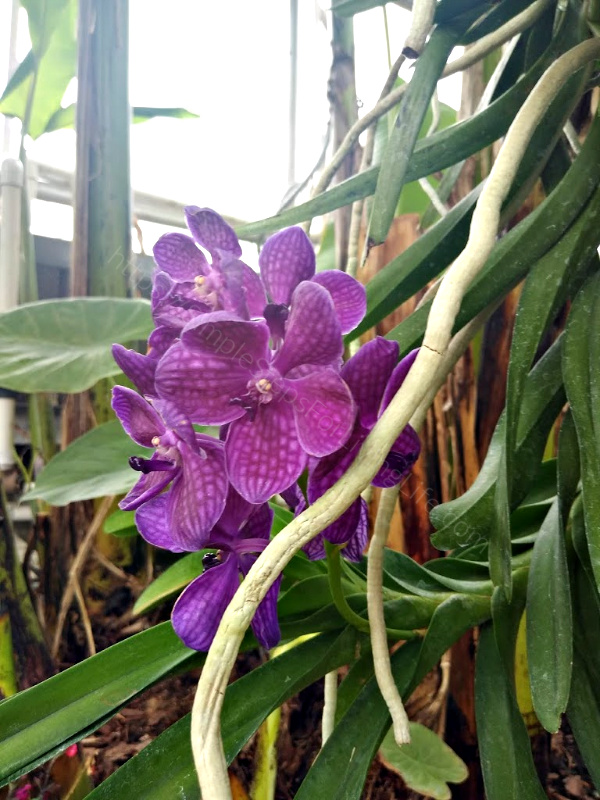 Ft Worth Botanic Garden Butterfly Exhibit Butterflies