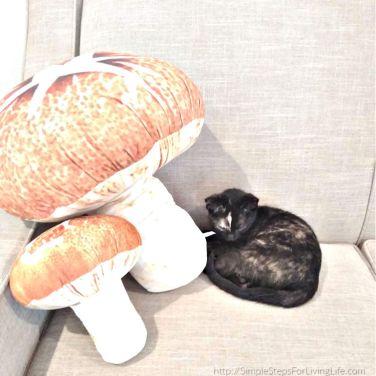 rocky with mushrooms