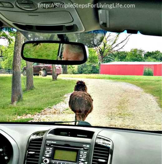 Fun Times At Wild Wilderness Drive-Through Safari