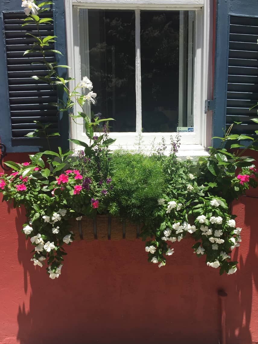 Roadtrip Reality: Charleston Window Boxes Pink