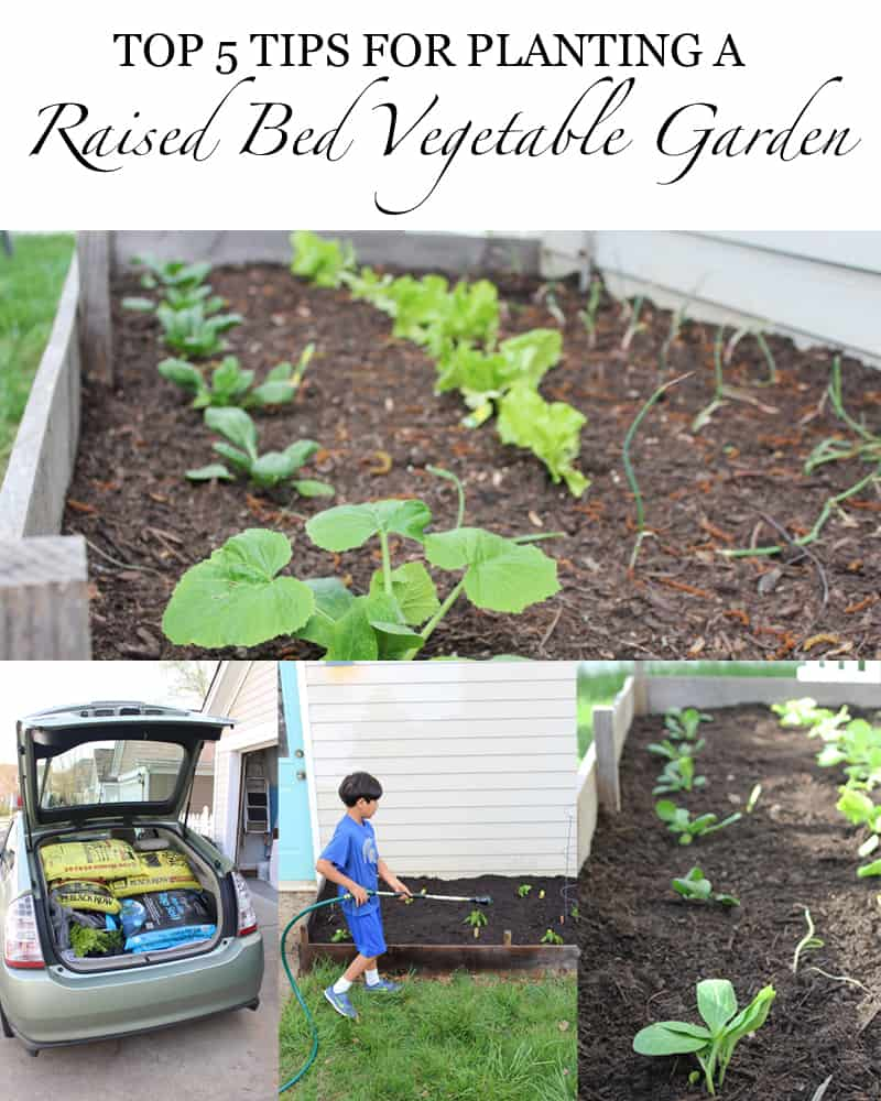 raised vegetable garden soil tips. top 5 tips for planting a raised bed vegetable garden - gardening soil