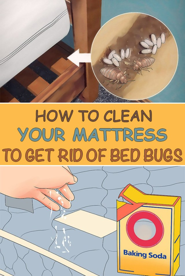 How To Clean Your Mattress To Get Rid Of Bed Bugs - Simple Tips