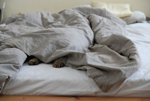 Lazy Bed Lazing Around Sleep Sunday Cozy Blanket