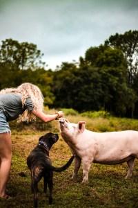 Why to eat seasonally - finding a farmer