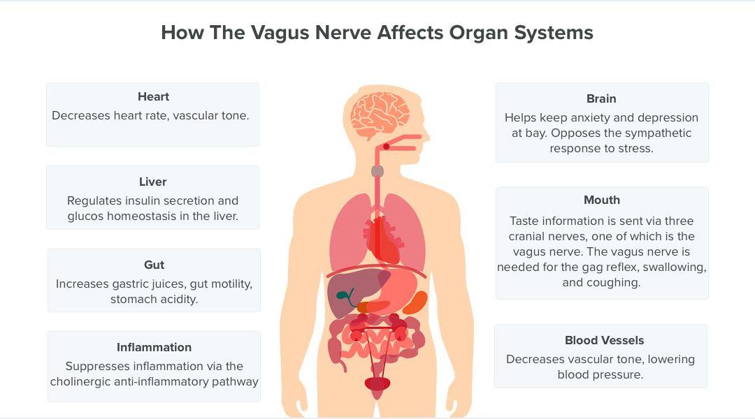 32 de metode științifice prin care să stimulezi instant nervul vag