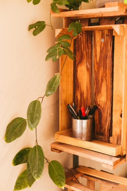 Green oval leaf plant on cabinet