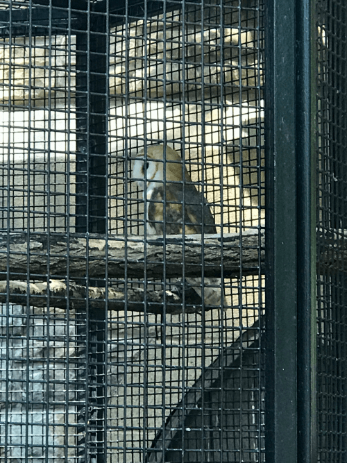 Owl Cage