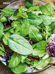 Rezept - Spinatsalat - Bewusst Low Carb – 05/2019