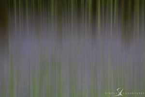 Bluebells - blur - abstract