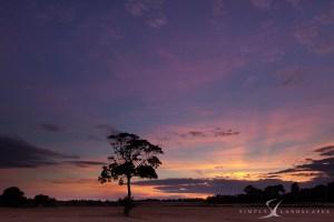Bosham Tree sunset