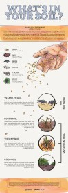 This infographic Kristah designed is an illustrated look at the parable of the sower.