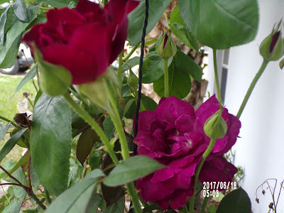 How Are You Feeling Today?-A Little Bit Of Something- Burgundy Rose the smell is great. Helps with coping in any situations.