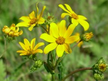Texas Wildflowers 1