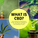 What is CBD? The complete beginner's guide to CBD oil, how much to take and tincture recommendations