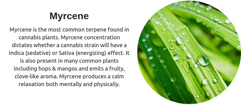 Terpenes Myrcene
