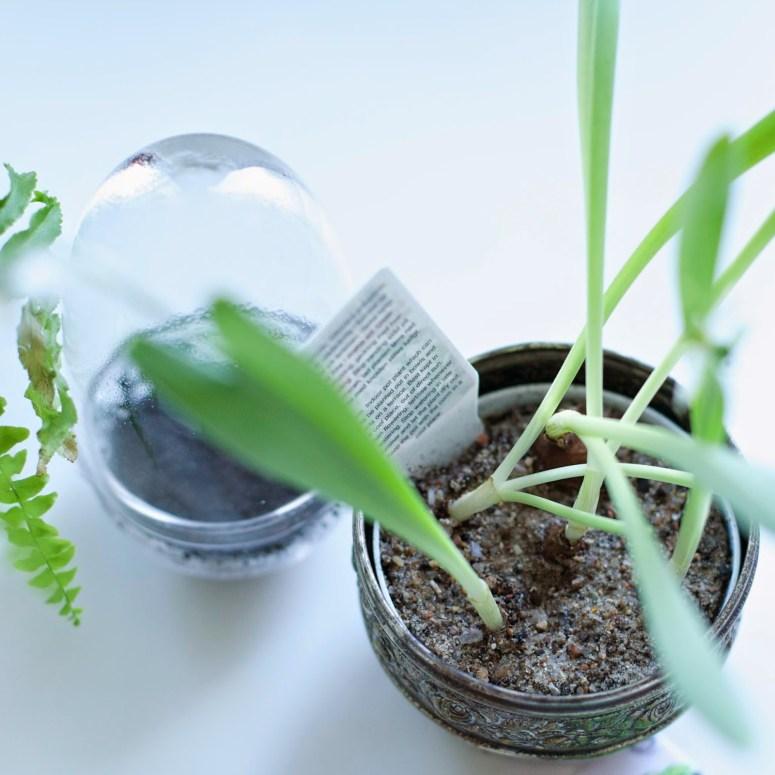 Starting your urban garden