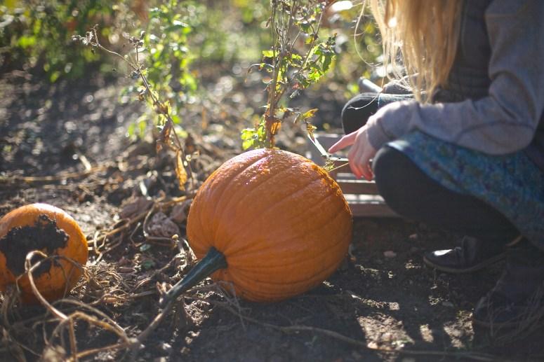 A visit to the pumpkin farm