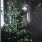 Julestjernens dag – The day of the Poinsettia