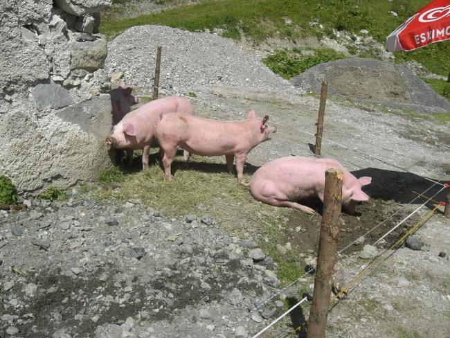 schweine-gebirge