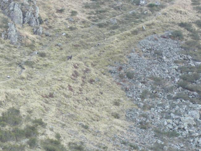 Tag 1: Dafür sah ich auf der neuen Route am Bilkengrat Bergziegen