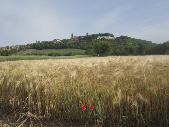 Wheatfield with puppies and Vézelay in the background