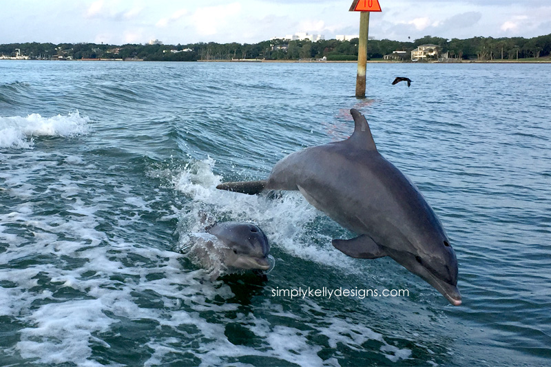 Dolphins Jumping In Clearwater Bay | Simply Kelly Designs