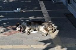 Oups, pardon, il y a quelques chiens aussi dans les rues ;-)