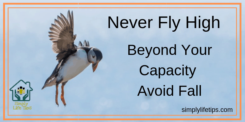Never Fly High Beyond Your Capacity | Avoid Fall