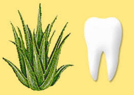 Aloe Vera For Teeth and Gums