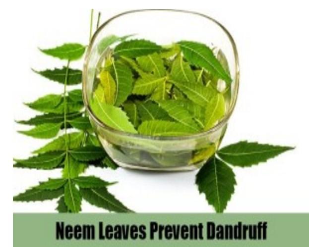neem leaves preven tdandruff