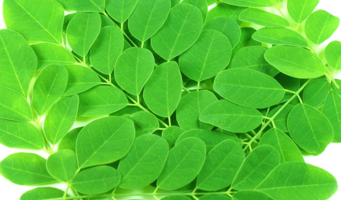 benefits of moringa plant