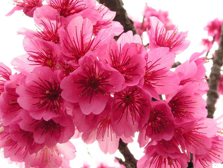 pretty flowers wallpaper BeautifulFlowersHDWallpapers