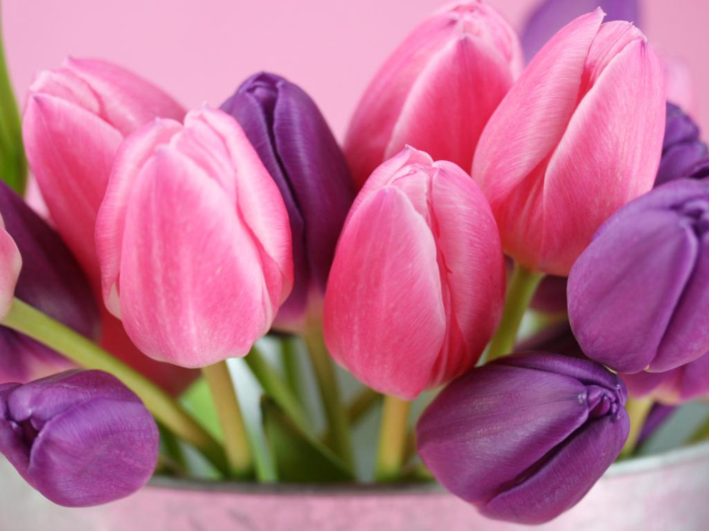 Worlds top 100 beautiful flowers images wallpaper photos free download pink purple flower hd wallpaper izmirmasajfo Choice Image