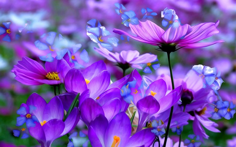 Worlds top 100 beautiful flowers images wallpaper photos free download pretty beautiful flower hd wallpaper for facebook mightylinksfo