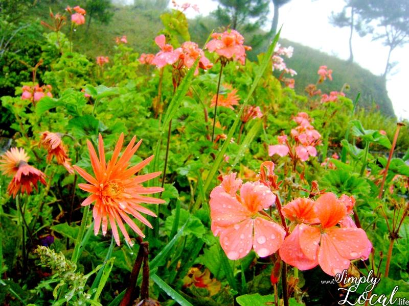 Take a Hike to Cinchona Botanical Garden