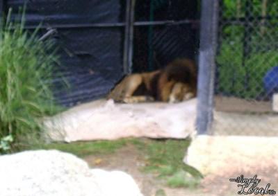 hope zoo15