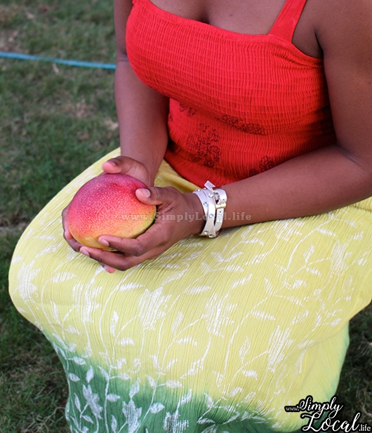 Jamaican Ripe Mango Season