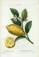Lemon Art Piece_1