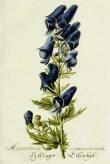 Blue Botanical Image_6