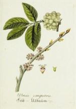 Lavender Botanical_10