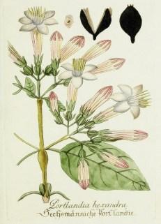Lavender Botanical_3