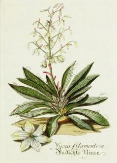 Lavender Botanical_4
