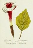 Magental Botanical_11