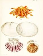 Seashell_13