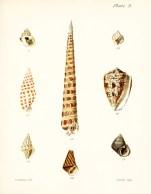 Seashell_27
